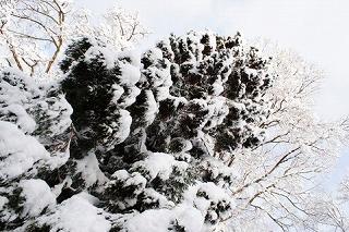 稚内市こまどりスキー場は初級者ファミリー向け